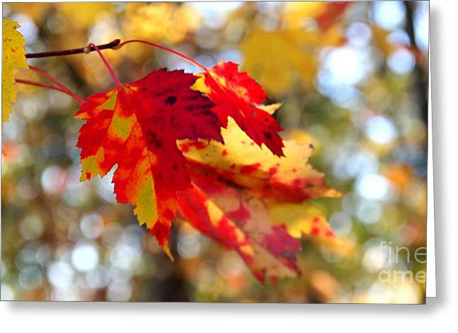 Greeting Card featuring the photograph Autumn Leaves by Adrian LaRoque