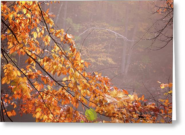 Greeting Card featuring the photograph Autumn Leaves And Fog by Tom Singleton