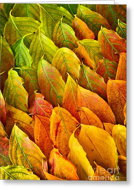 Autumn Leaves Arrangement Greeting Card by Elena Elisseeva
