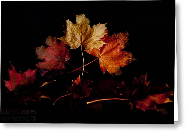 Greeting Card featuring the photograph Autumn Leaves by Beverly Cash