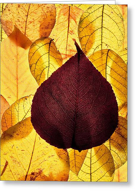 Autumn Leaves Greeting Card by Bob Decker