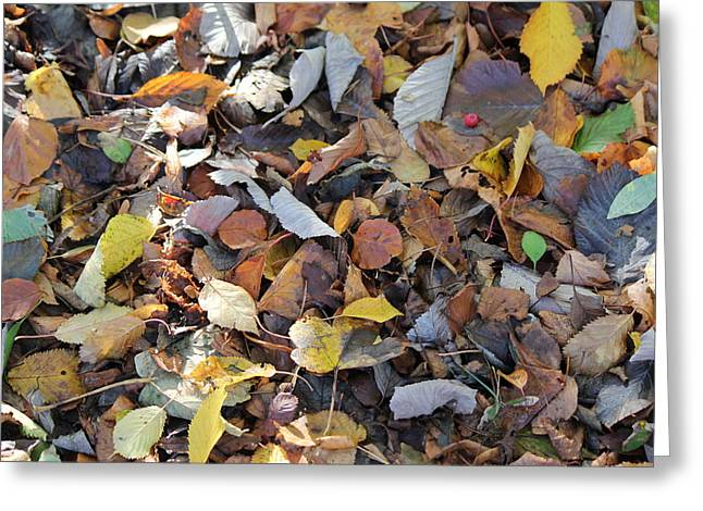 Greeting Card featuring the photograph Autumn Leaves by David Grant