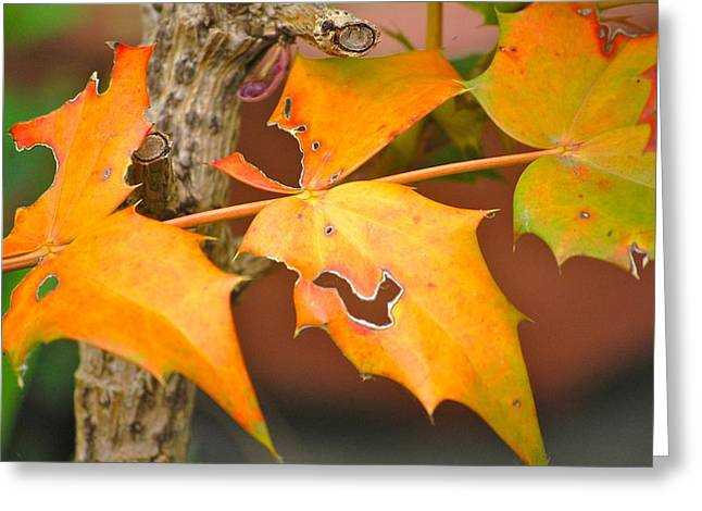 Autumn Leaves Greeting Card by Dickon Thompson