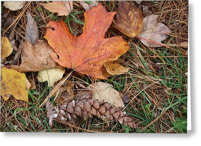 Greeting Card featuring the photograph Autumn Leaves by Donna  Smith