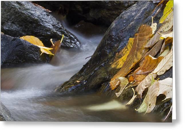 Autumn Leaves  Greeting Card by Dustin K Ryan