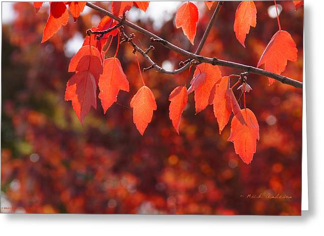 Autumn Leaves In Medford Greeting Card by Mick Anderson