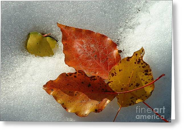 Autumn Leaves In Snow Greeting Card