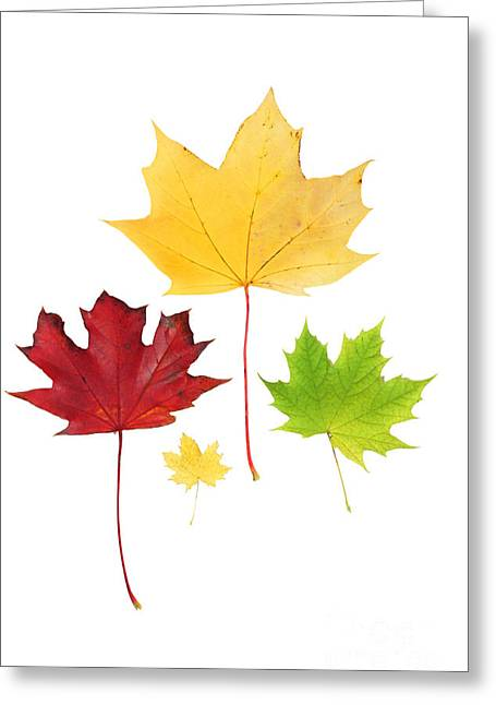 Autumn Leaves Isolated Greeting Card