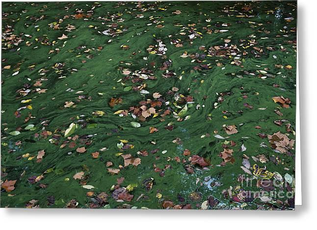 Autumn Leaves Greeting Card by John Greim