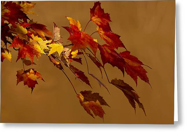 Greeting Card featuring the photograph Autumn Leaves by Judy  Johnson