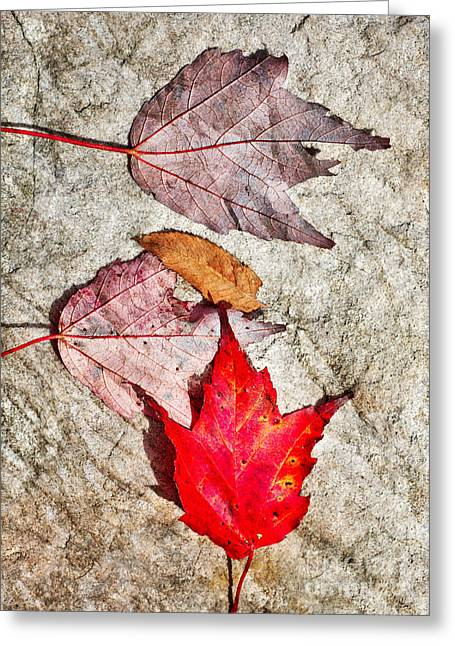 Autumn Leaves On A Rock I Greeting Card by Dan Carmichael