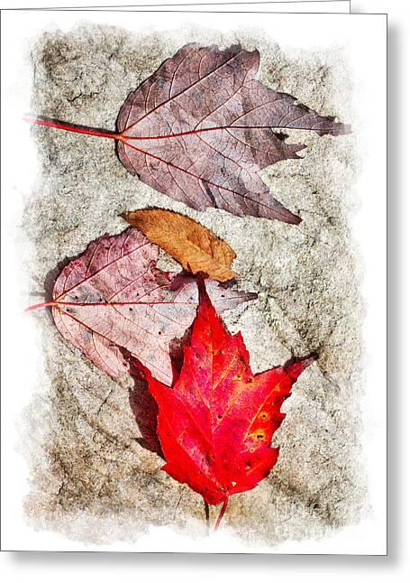 Autumn Leaves On A Rock II Greeting Card by Dan Carmichael