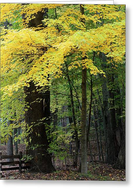 Autumn Leaves Greeting Card by Penny Hunt
