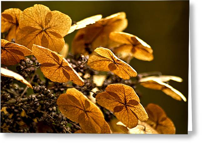 Autumn Light Greeting Card by Carolyn Marshall