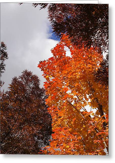 Autumn Looking Up Greeting Card by Mick Anderson