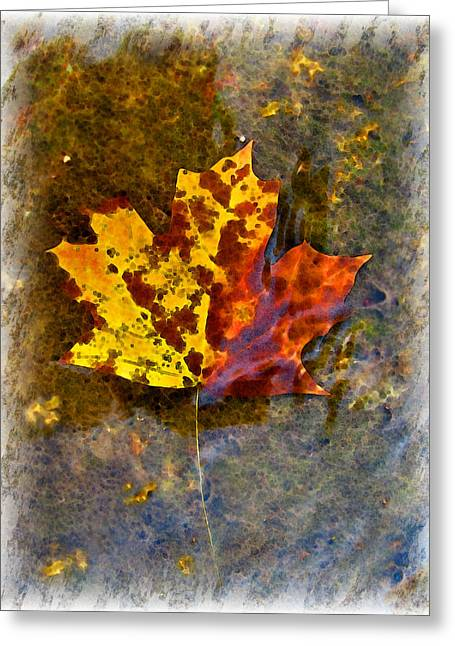 Greeting Card featuring the digital art Autumn Maple Leaf In Water by Debbie Portwood