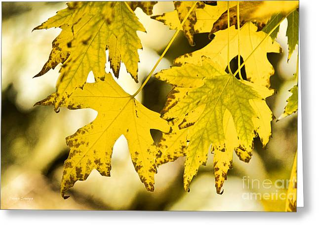 Autumn Maple Leaves Greeting Card by James BO  Insogna