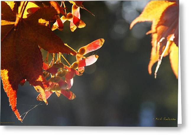 Autumn Maple Greeting Card by Mick Anderson