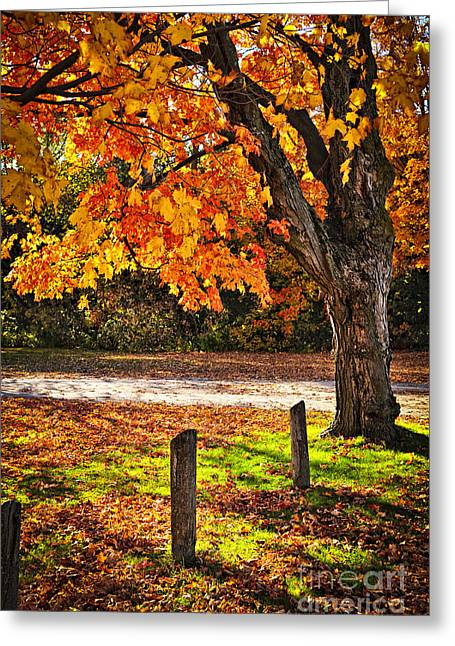 Autumn Maple Tree Near Road Greeting Card