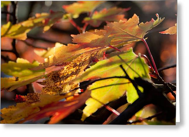 Autumn Morning Greeting Card by David Troxel