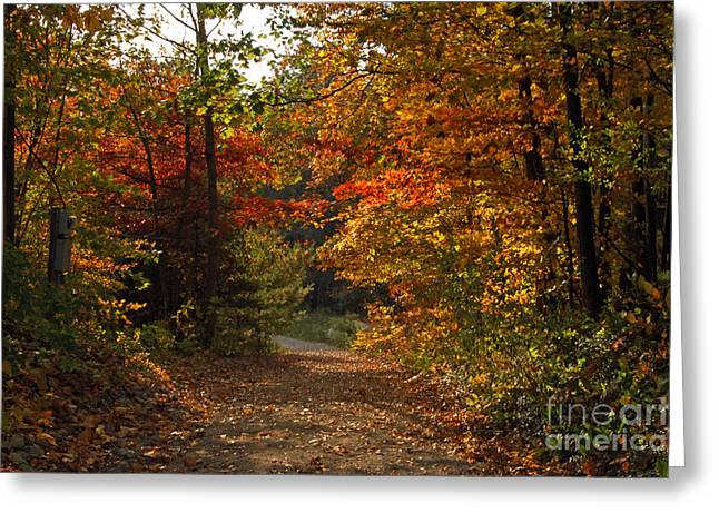 Autumn Nature Trail Greeting Card by Cheryl Cencich