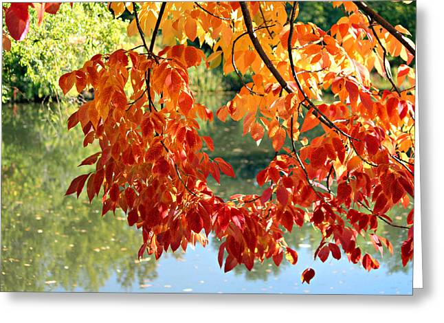 Autumn On The Pond Greeting Card
