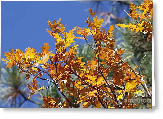 Autumn Orange Greeting Card