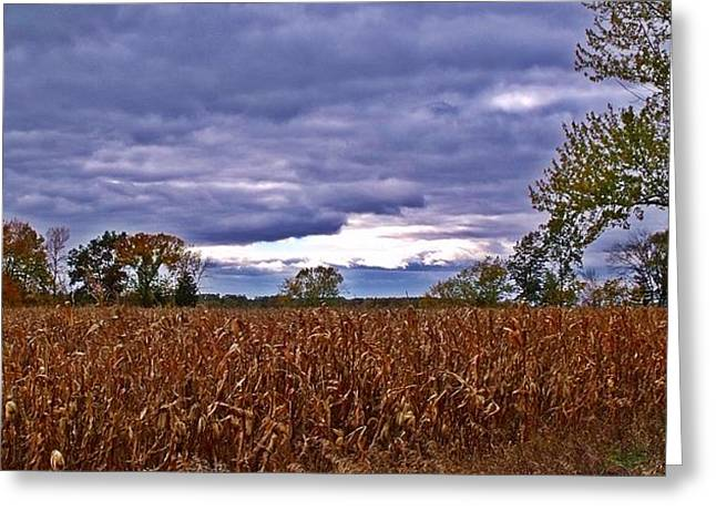 Autumn Overcast 12 Greeting Card by Dave Dresser