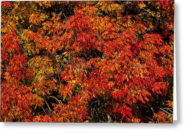 Autumn Red Greeting Card by Garry Gay
