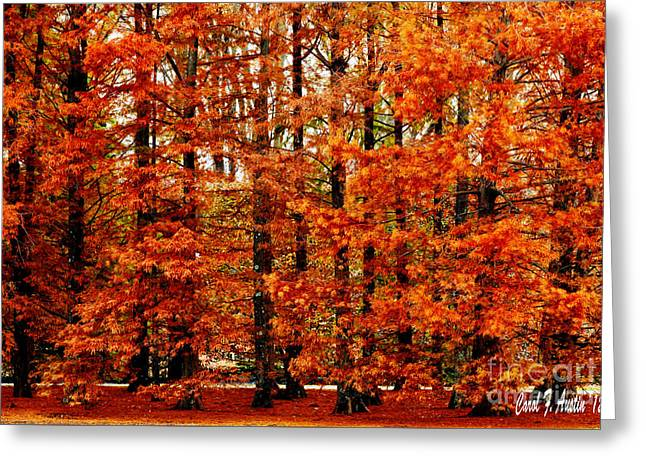 Autumn Red Maple Landscape Greeting Card