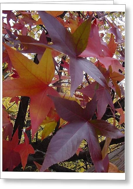 Autumn Rhapsody Greeting Card
