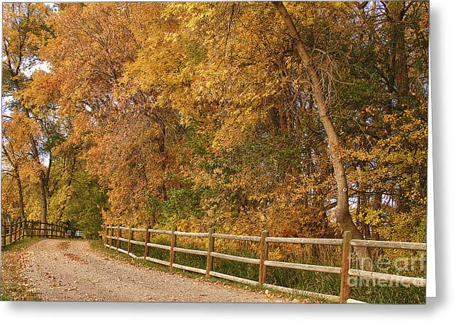Autumn  Road To The Ranch Greeting Card by James BO  Insogna