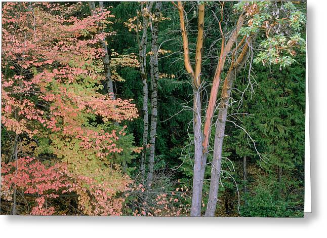 Autumn Scene Greeting Card by Mark Greenberg