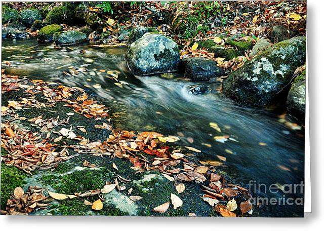 Autumn Scenic Greeting Card by HD Connelly