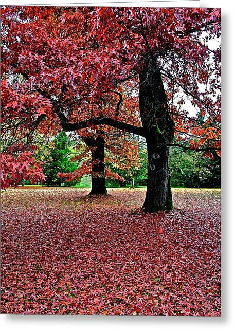 Greeting Card featuring the photograph Autumn by Scott Holmes