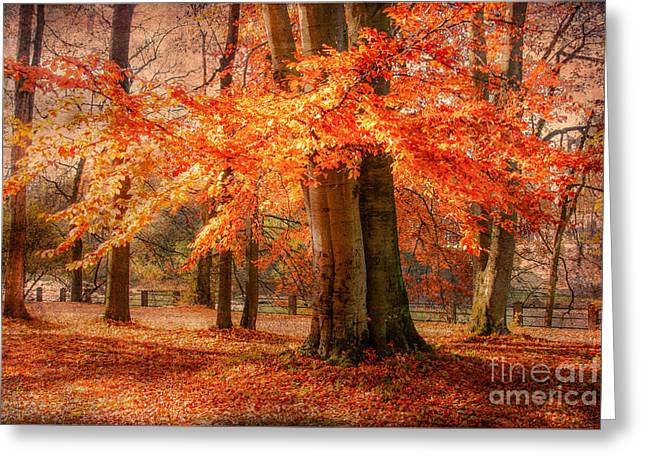 autumn skirt I Greeting Card by Hannes Cmarits