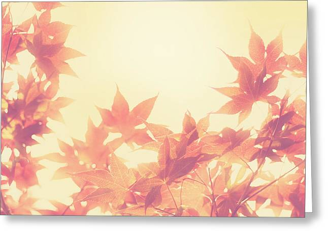 Autumn Sky Greeting Card by Amy Tyler