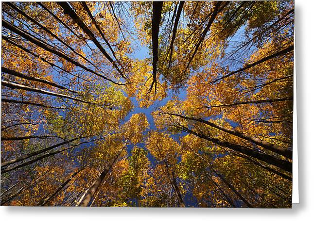 Autumn Sky Greeting Card by Mircea Costina Photography
