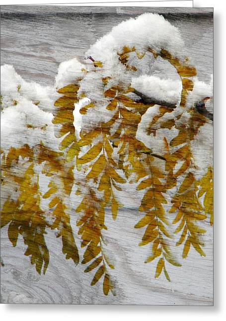 Greeting Card featuring the photograph Autumn Snow by Michelle Frizzell-Thompson