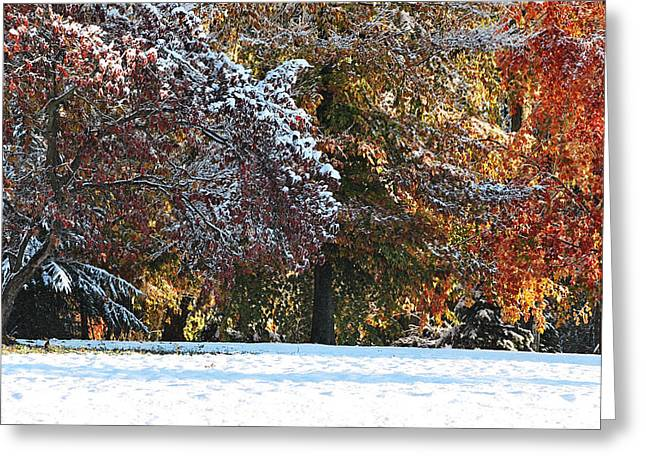 Autumn Snowstorm Greeting Card by Kimberly Little