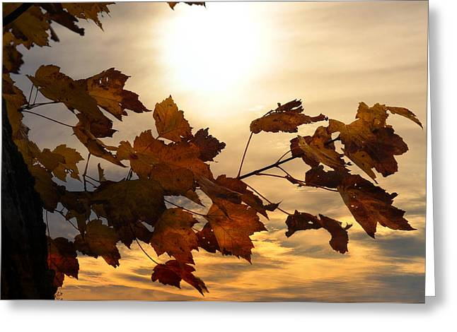 Autumn Splendor Greeting Card by Bill Cannon