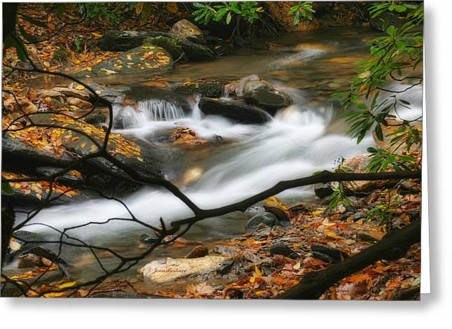 Greeting Card featuring the photograph Autumn Spring by Joan Bertucci