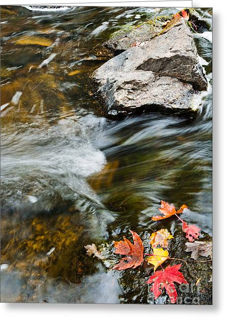 Greeting Card featuring the photograph Autumn Stream by Cheryl Baxter