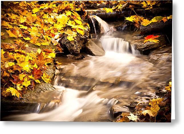 Autumn Stream No 1 Greeting Card by Kamil Swiatek