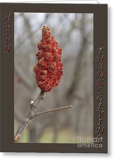 Autumn Sumac  Thanksgiving Greeting Card #2 Greeting Card by Andrew Govan Dantzler