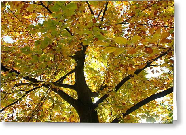 Autumn Sun Greeting Card by Karen Grist