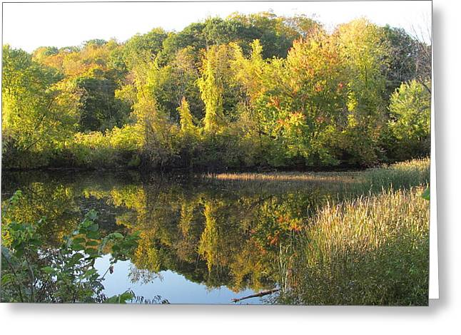 Autumn Sunlight On The Pond Greeting Card