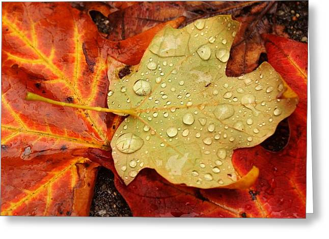 Autumn Treasures Greeting Card by Matthew Green