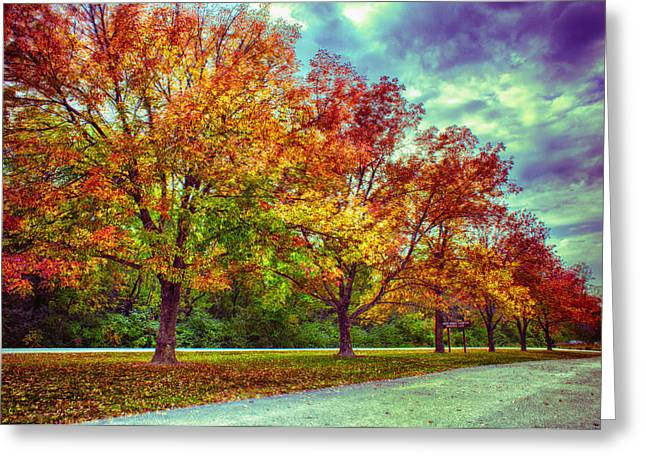 Autumn Tree Line At Busch Greeting Card by Bill Tiepelman