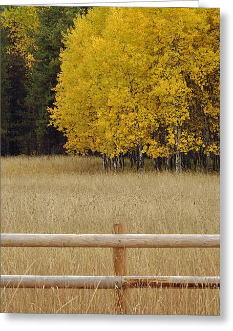 Autumn Trees And Grasses Near Glacier Greeting Card